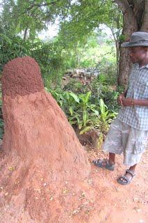Woohoo! Termites!